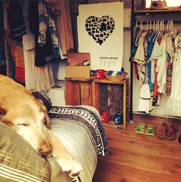George the dog inside Small Room Collective mobile shop